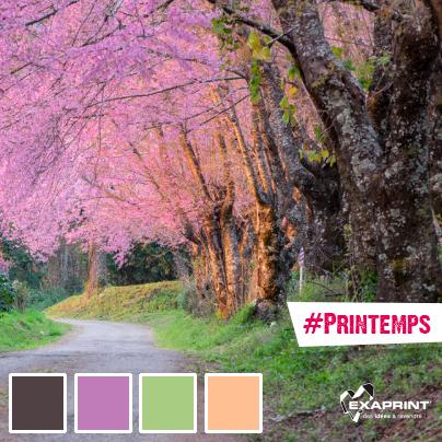 """#ExaCouleur #LeSaviezVous Chaque année au Japon la population suite le """"Front de floraison des cerisiers"""" à la télé ?"""