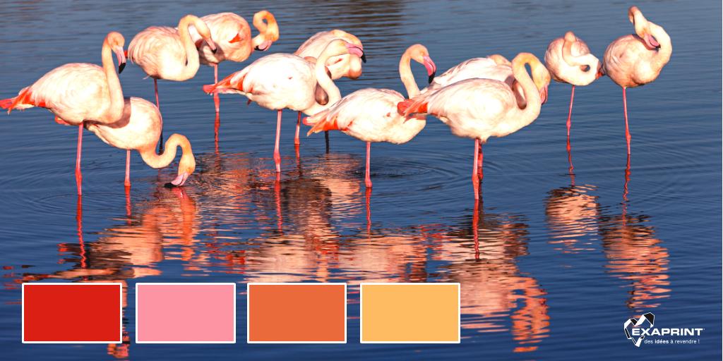 Le saviez vous ? La couleur des flamants vient de leur capacité à convertir en rose les pigments de carotène contenus dans leur nourriture (crustacés tels que Artemia salina, algues et invertébrés).