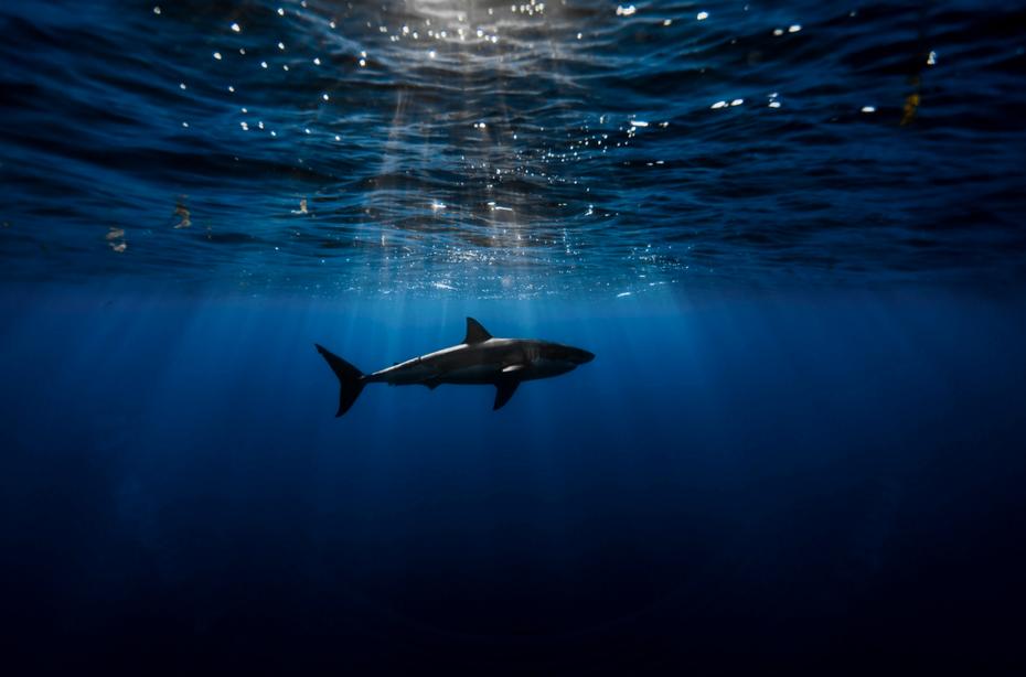 photo requin flickr