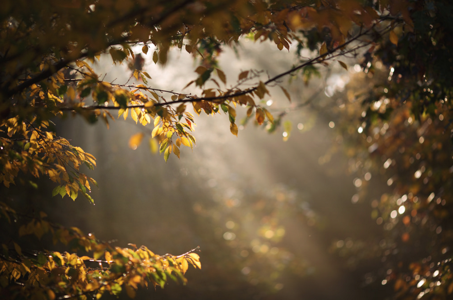 photo lumiere arbre flickr