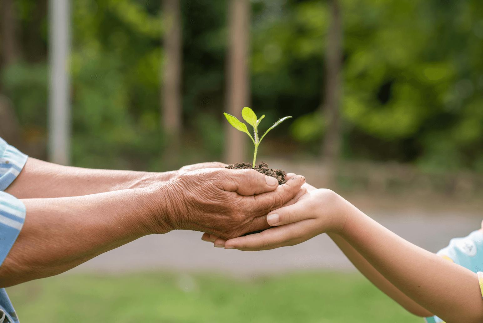 main de vieil homme et enfant qui soutiennent une plante